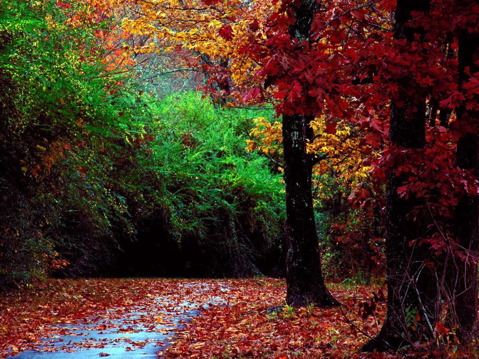 autumn forest and landscape color