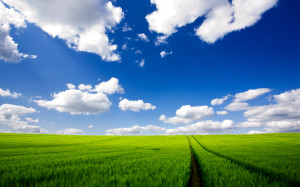Green Field HD Wallpaper