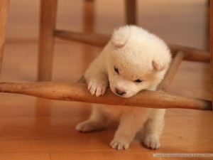 Lovely Puppy Dog Wallpaper