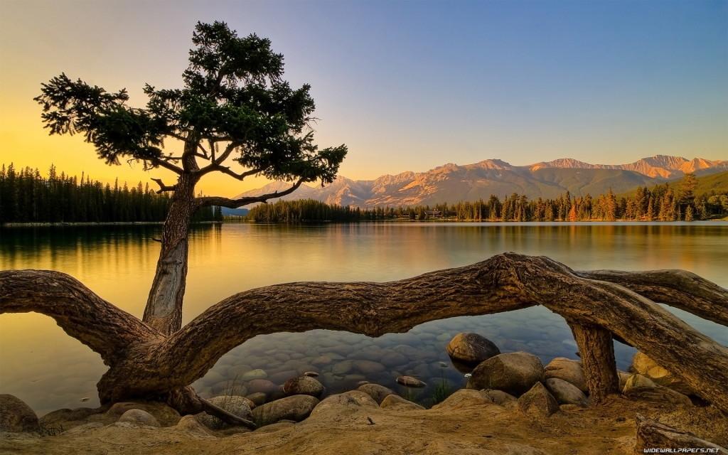 Beautiful Tree HD Wallpaper