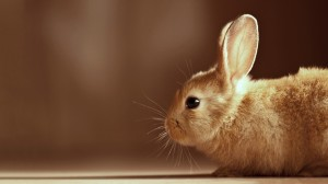 Cute Bunny HD Wallpaper