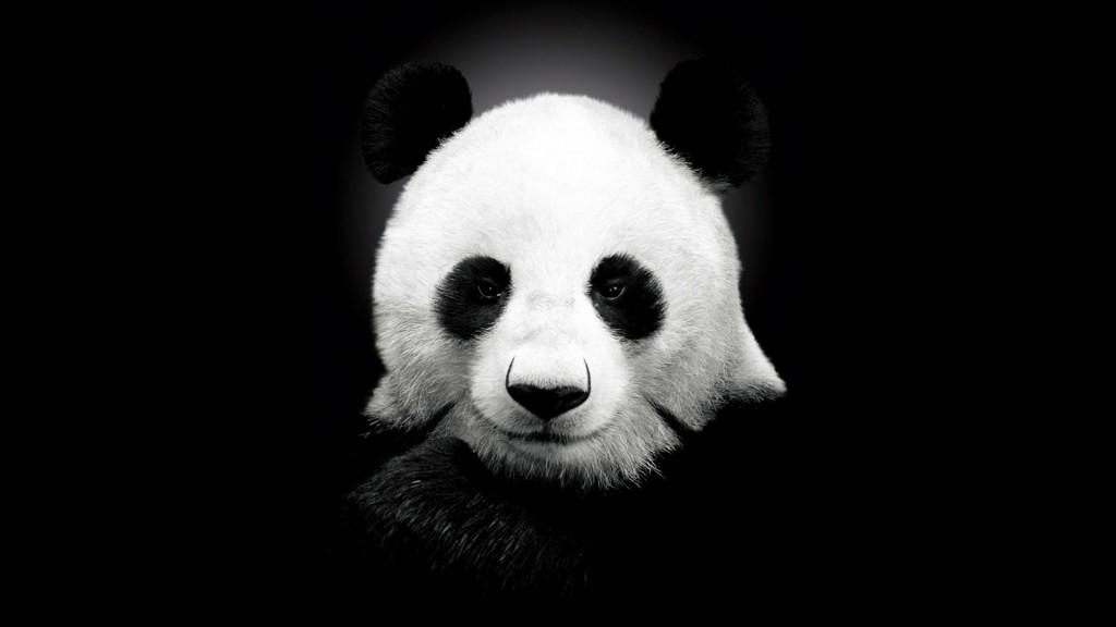 Black Panda Wallpaper