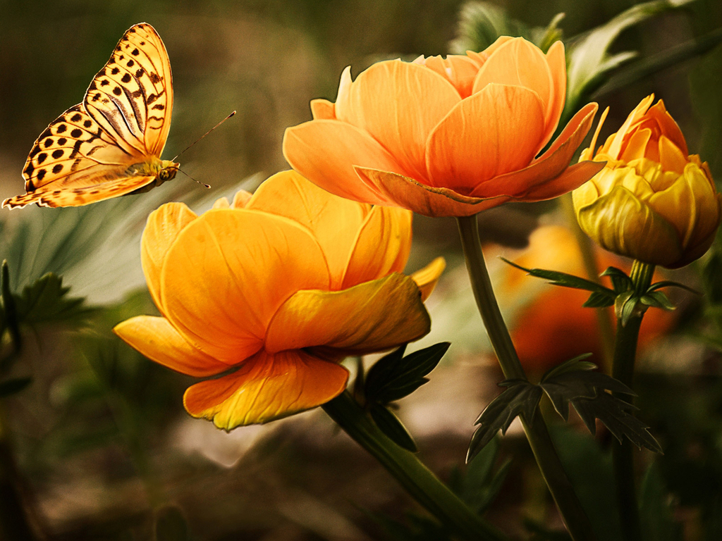 Butterfly on Flowers Wallpaper