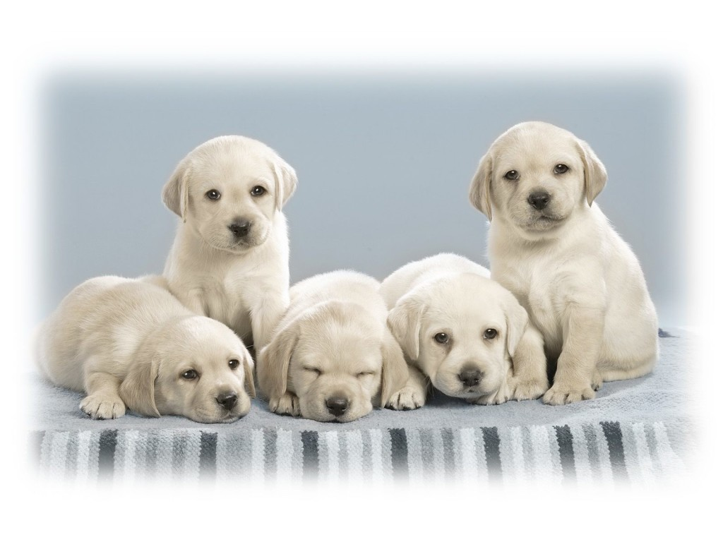 Cute Puppies Wallpaper