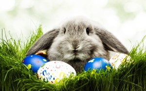 Easter Bunny HD