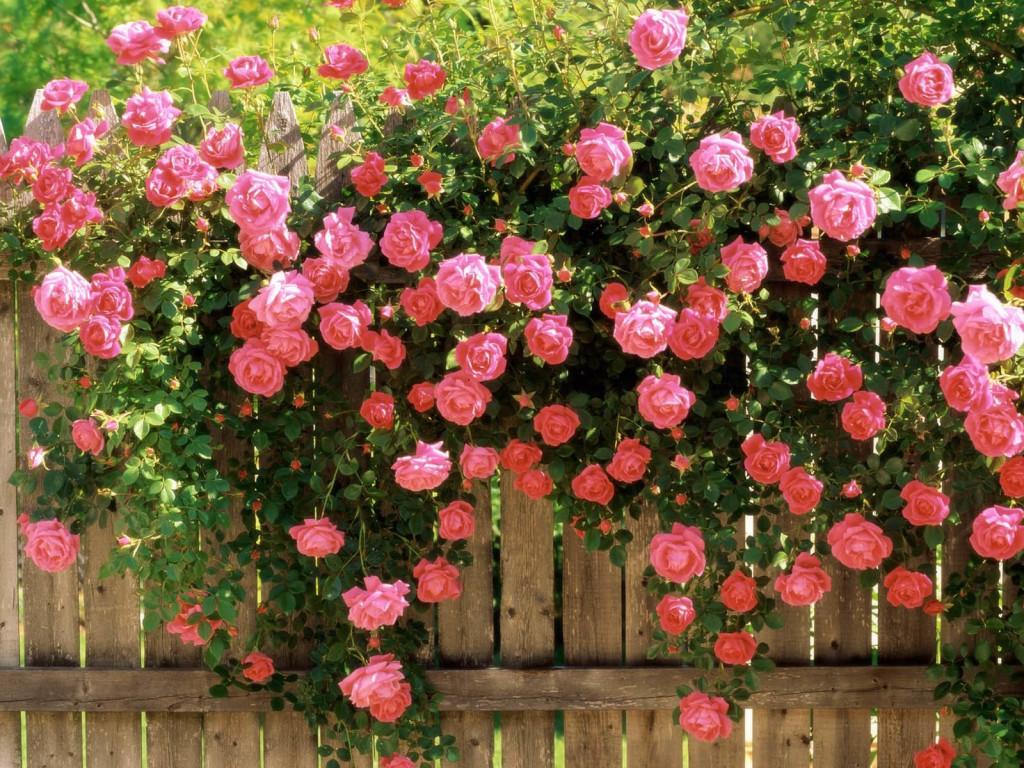 Flower HD
