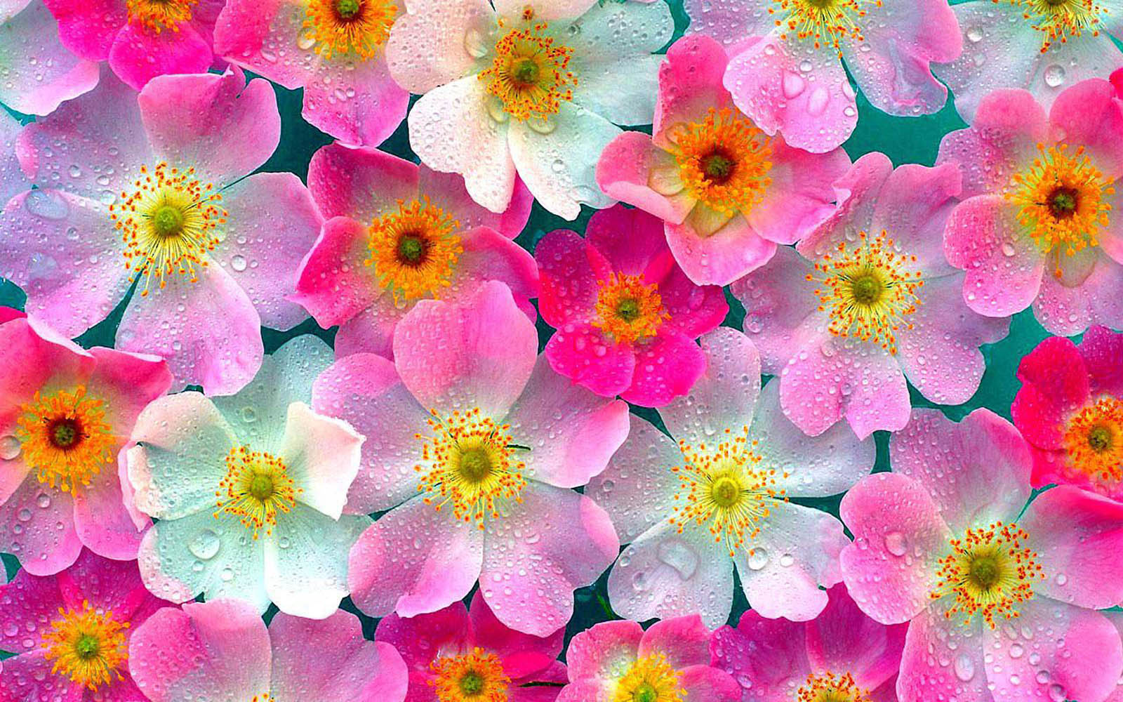 flowers pink wallpaper
