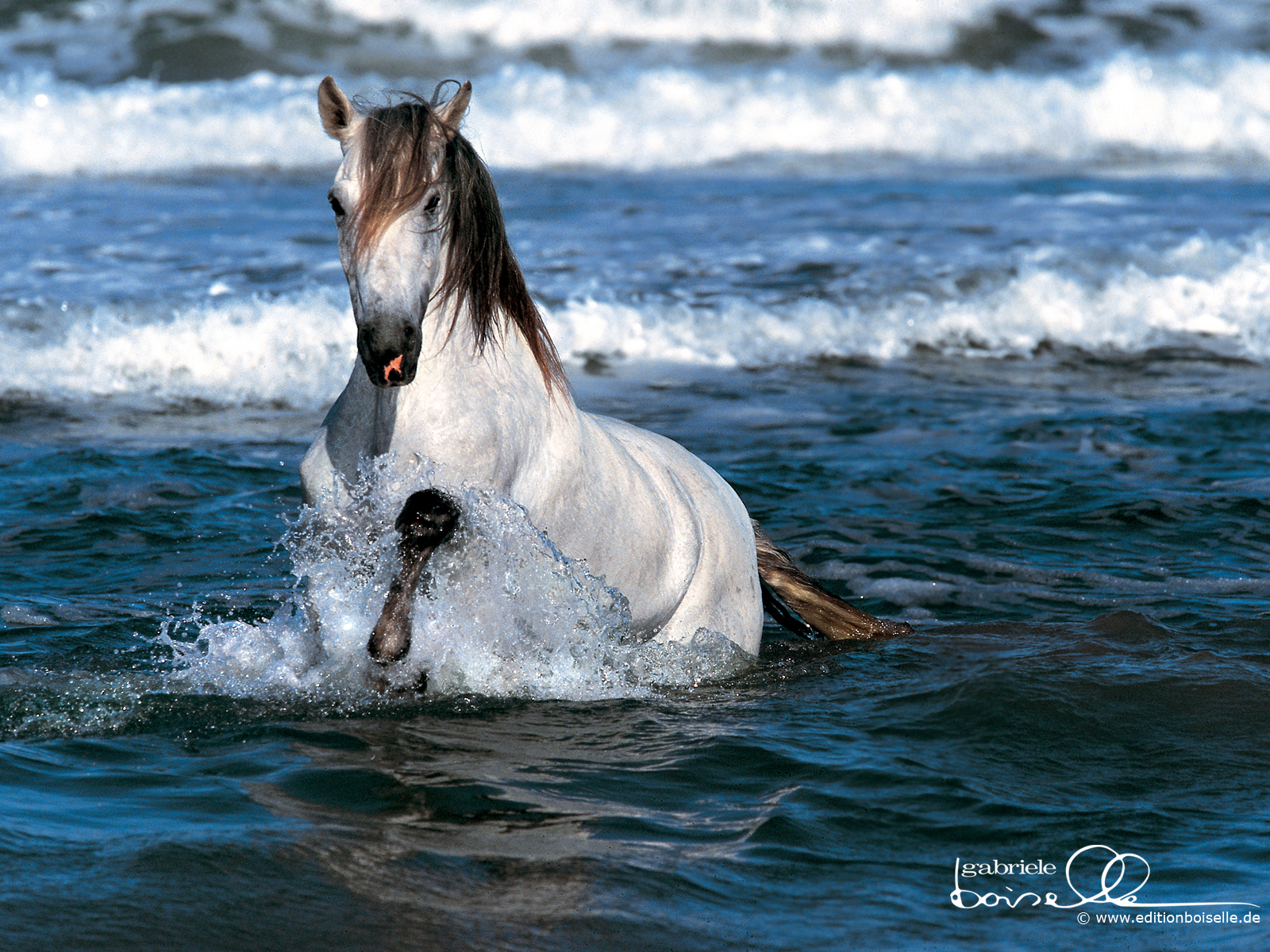 Free horse wallpaper - Free horse backgrounds ...