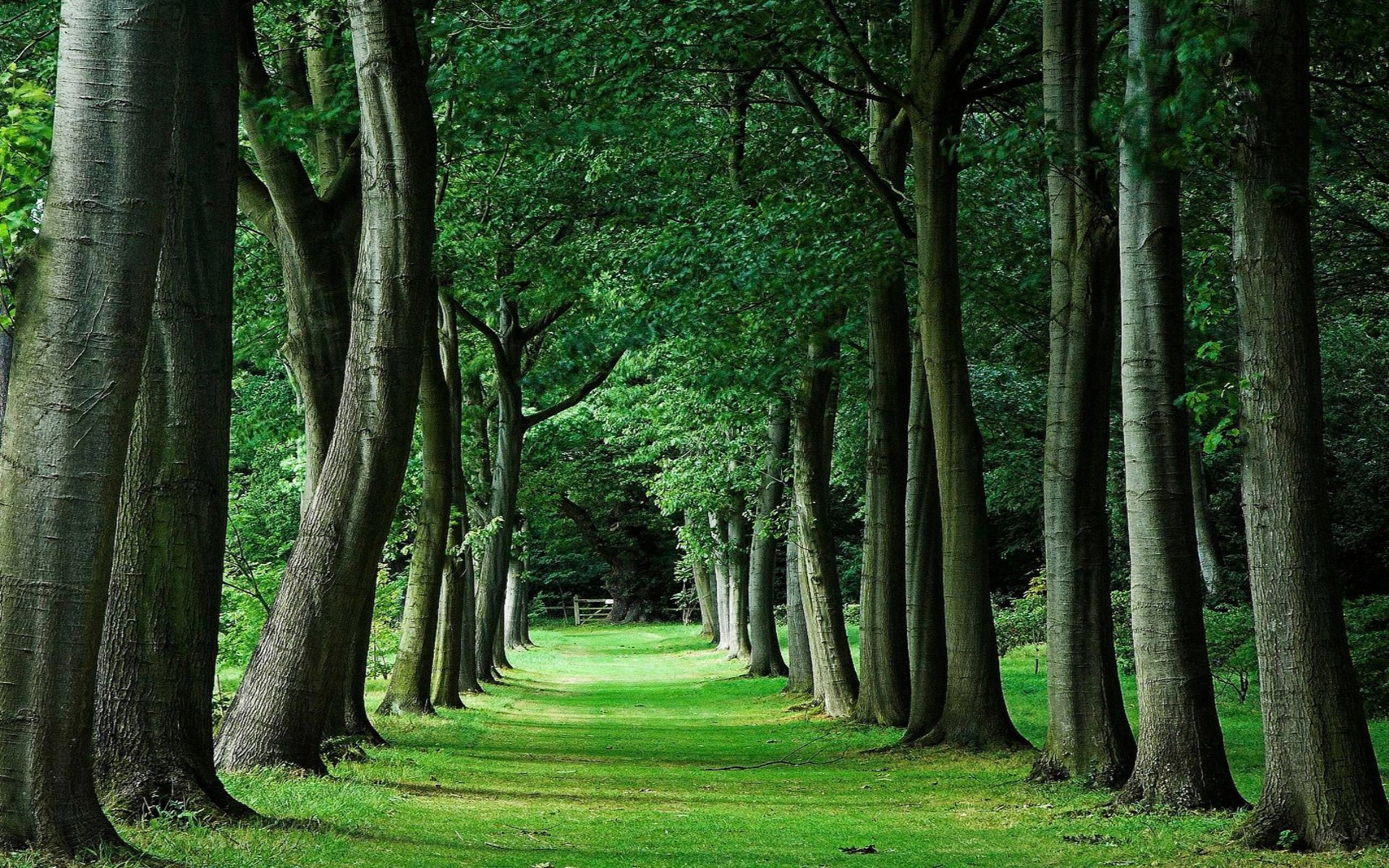 3d wallpaper trees - photo #41