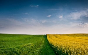 Green and Yellow Fields Wallpaper