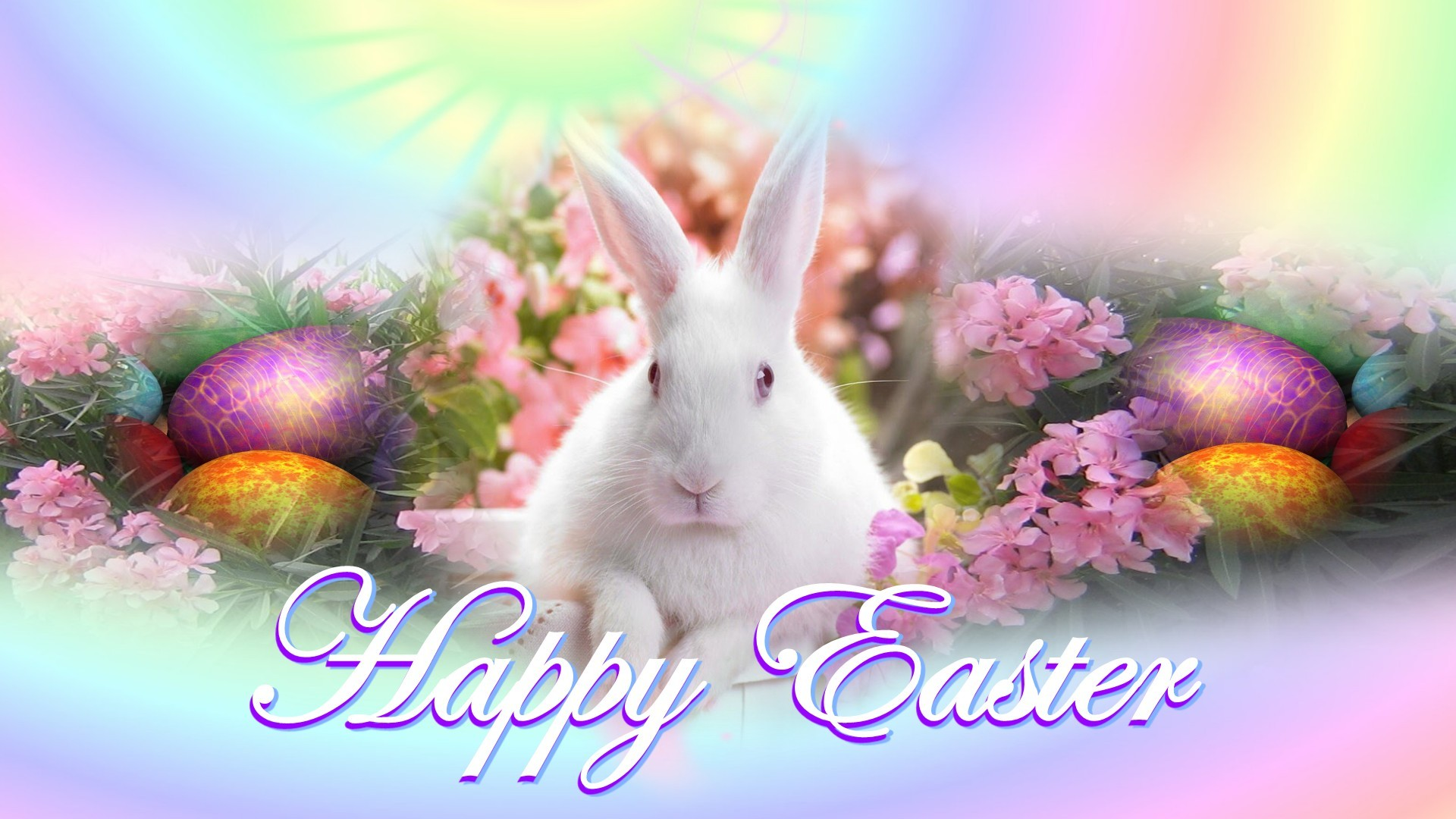 Happy Easter Bunny 2013 | Wallpup.com
