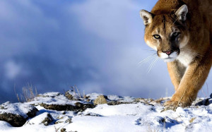 OSX Mountain Lion Wallpaper