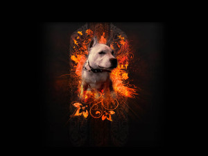Pitbull Dogs White Wallpaper