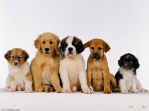 Puppies Dog Wallpaper