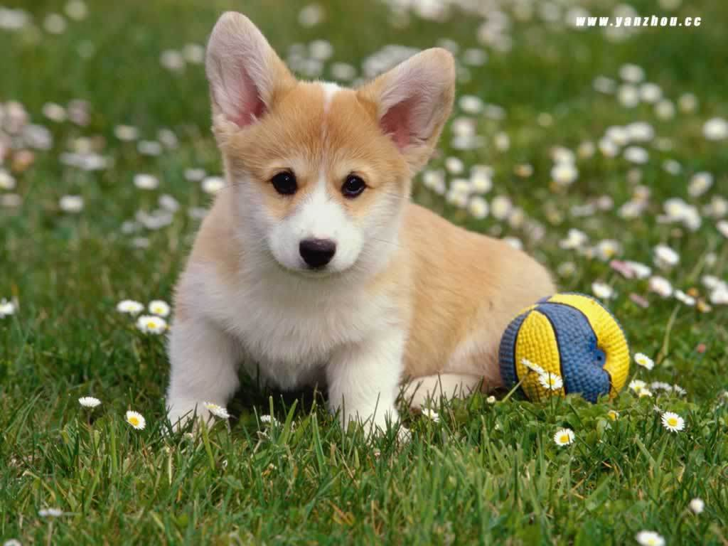 Puppy Dog Wallpapers