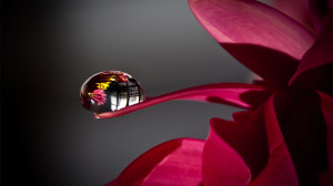 Water Drop on Water Wallpaper