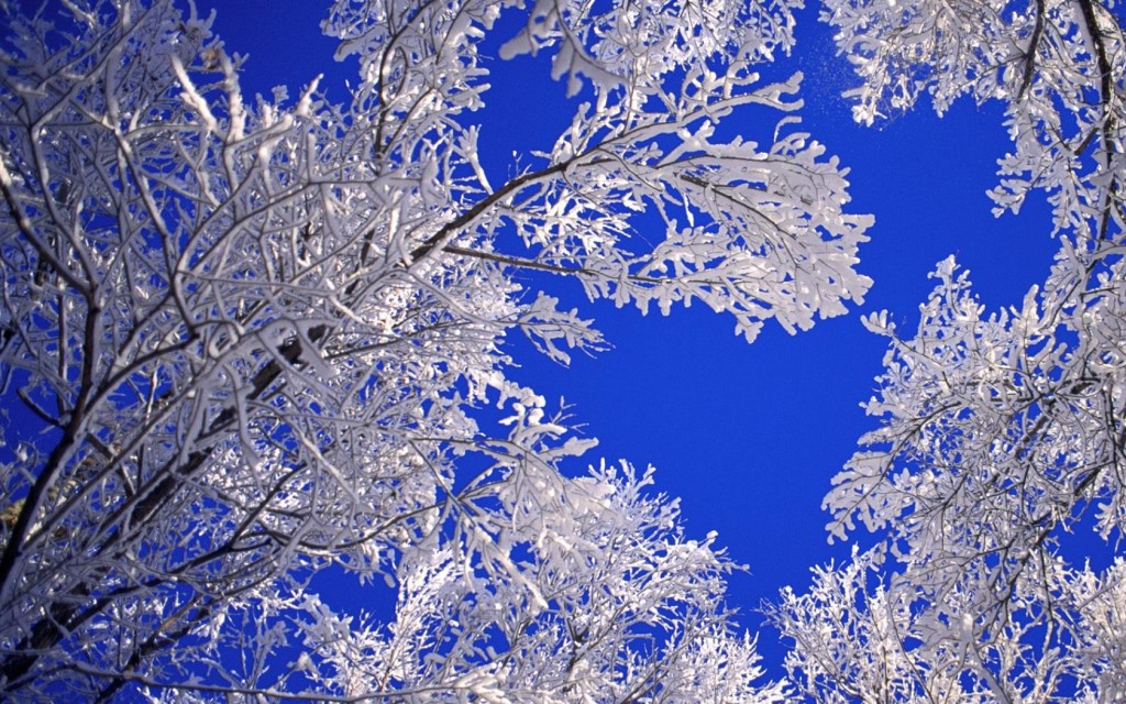 Beautiful Winter Tree HD Wallpaper