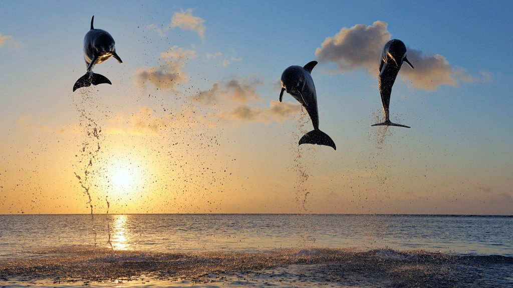 Dolphins in Bay Islands Wallpaper
