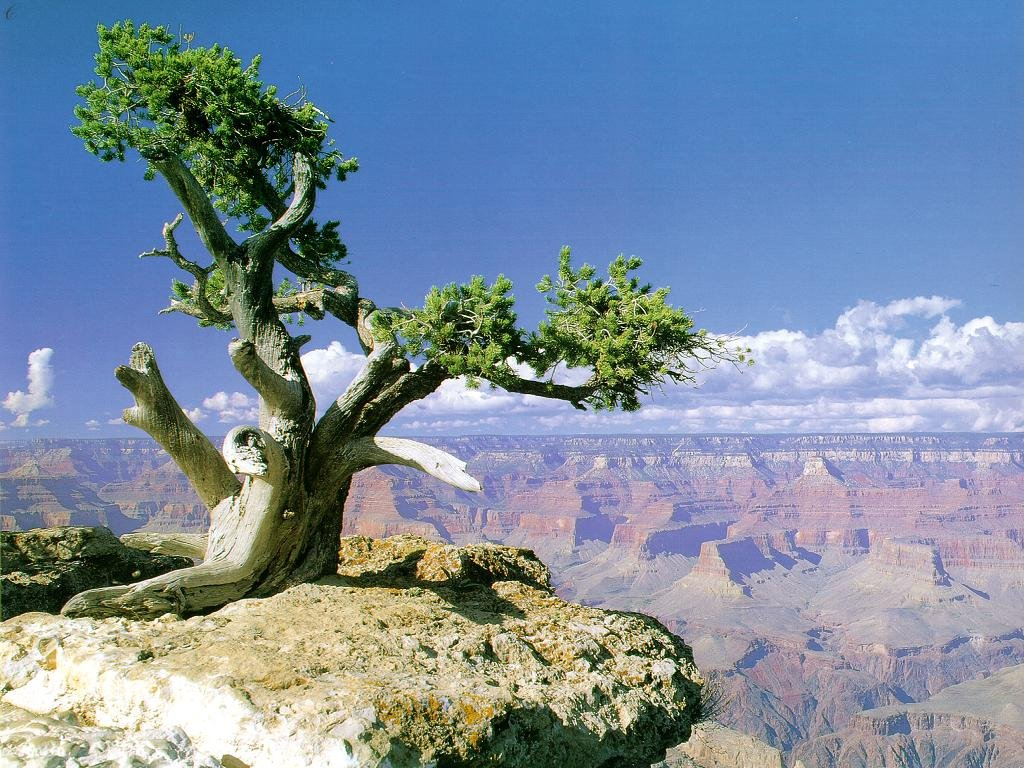 Grand Canyon Wallpaper HD