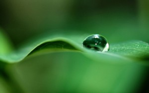 Green Dew Drop Wide Wallpaper