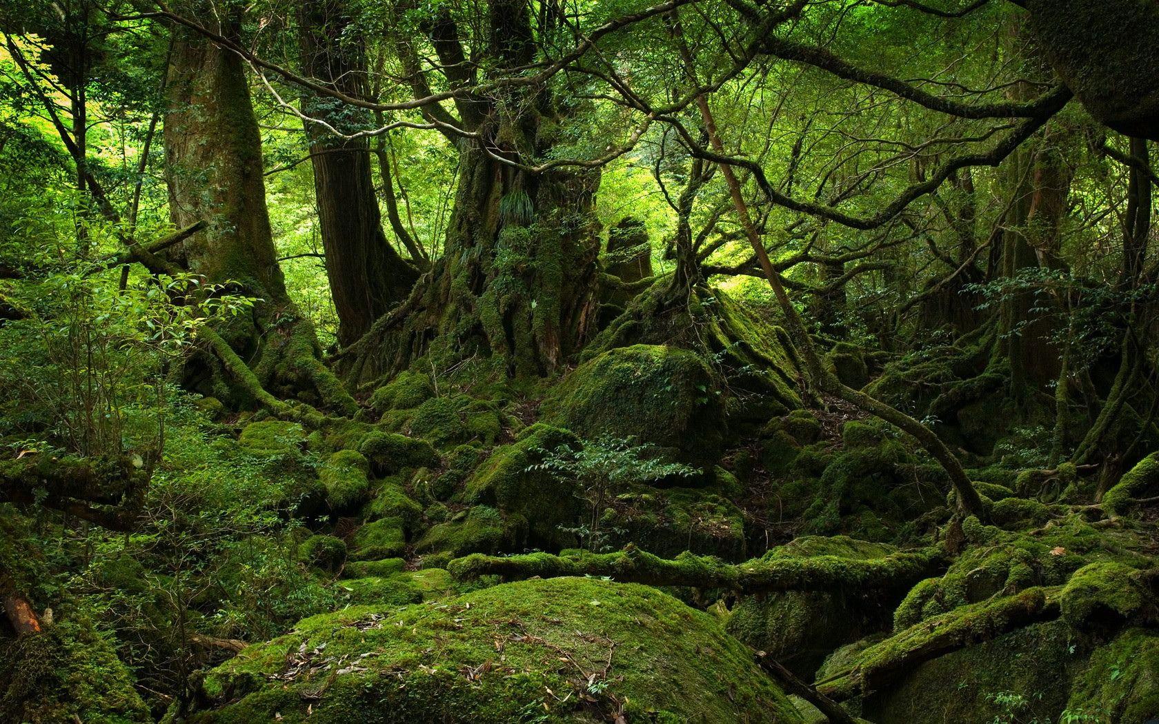 Description: Jungle Forest Wallpaper is a hi res Wallpaper for pc ...