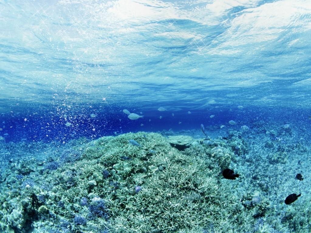 Underwater Fish Wallpaper