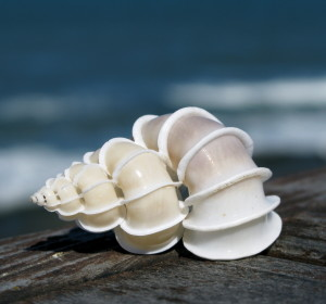 3d-seashell-hd-wallpaper